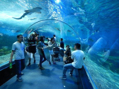 The walk-through aquarium was the most popular feature at Ocean Park; traffic in Manila is horrendous and chaotic and likely to get worse with all of the new high-density development