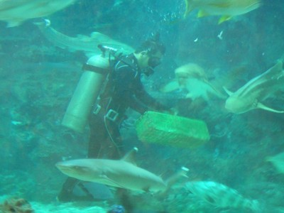 This diver was feeding the sharks squid but the animals were all well-behaved and not at all aggressive; squalor was pervasive across Manila with most people struggling to make money