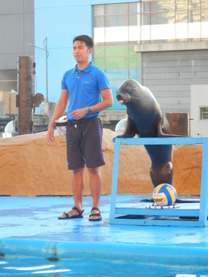 The sea lions were so smart and even trained to stick out their tongues; these sea lions are from Chile since they are not endemic to the Philippines