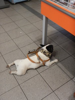Like France, dogs are taken everywhere in the Netherlands; this pooch is cooling it in the grocery store but, compared to France, there are fewer dogs here and they are better cleaned up after
