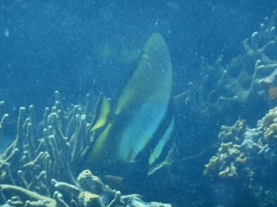 Batfish; there were tons of kids in Coron and lots of young people but I saw virtually no old people