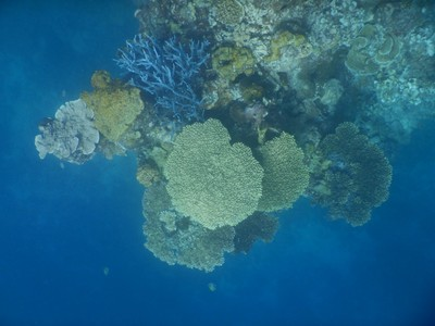 Coral ledge jutting out from side of wall; similar to Vancouver, Coron isn't on Coron Island but on Busuanga Island while Coron Island is just across the strait