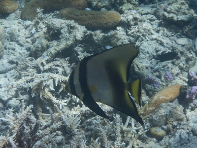 Batfish; my basic hotel was clean, had great AC and a comfy bed with a price of only $200 for 5 nights (breakfast was included although I stuck with PowerBars)