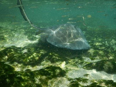 I'm glad I didn't pay to touch or feed a sting ray here; I much preferred seeing them in their natural environment