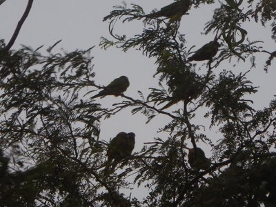 Noisy green parakeets would descend on Taganga every evening; the village was quite sleepy during the day but was lively at night