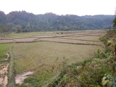 Rice dominates agriculture, with about 80 percent of the arable land area used for growing rice; however, only 4% o the country is arable land, and a mere 0.34% ued as permanent crop land