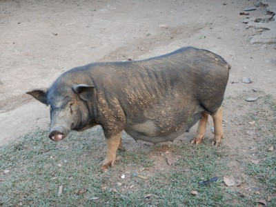Our village homestay was for the pigs; I would have preferred the extra night in Vang Vieng so we could have enjoyed kayaking and/or visiting one of the nearby blue lagoons (although there are lots of Chinese tourists crowding sights)