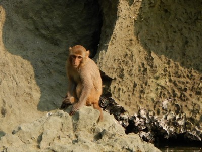 The acrobatic jumps of the macaques made us nervous but they never missed a branch; the food on our boat was excellent and professionally presented