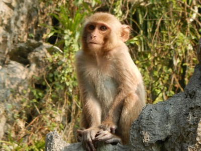 The macaques would come down to the water line to look for mollusks to eat; there were large macaque families present at different places around the lagoon