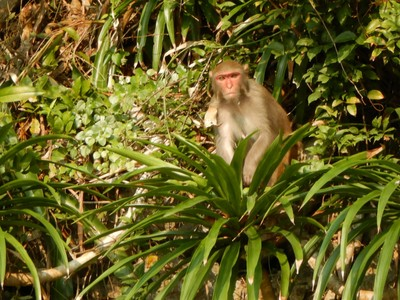The macaques were very entertaining but largely ignored the tourists except when they got too close; they knew the kayakers couldn't get onto their island