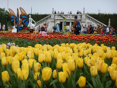 More than a million tulips brighten the park this spring; we had two Dutch girls on our tour and they lamented that they'd flown halfway around the world to see more tulips
