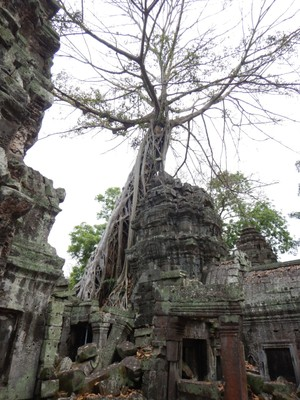 Ta Prohm was used as a location in Tomb Raider starring Angelina Jolie; Jolie is beloved thanks to her foundation which is dedicated to alleviating extreme rural poverty, protecting the environment and conserving wildlife in rural northwestern Cambodia