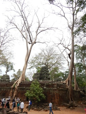 Ta Prohm is surrounded by an outer wall of 1000 by 650 meters that at one time would have been the site of a substantial town, but that is now largely forested