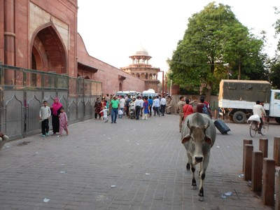 Hmm, who has the right of way?; Agra has a population of roughly 2 million with 88% o them being Hindu while 9% ae Muslim