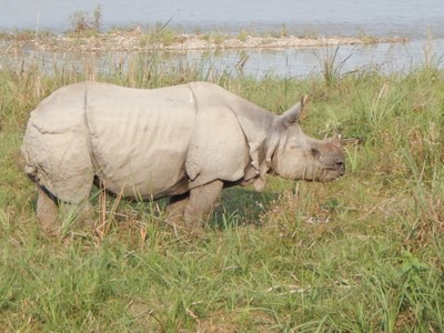 At Chitwan National Park we went on a safari seeing 10  rhinos, wild boars, monkeys and crocodiles; our guide pointed out lots of cool birds but they were too fast to photograph