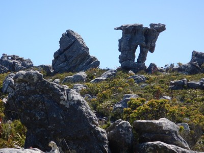 This rock formation on our long hike up Table Mountain is called the camel; our tour group was lucky to have a sunny day since the top of Table Mountain is cloud-covered more than 300 days a year