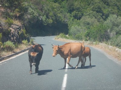 The roads in Corsica are constantly winding so you're lucky to hit 30 mph; another reason not to go very fast is you never know what's around the next blind curve
