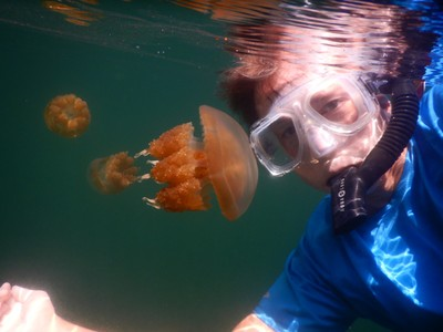 Jellyfish Lake closed in 2016 when drought killed off millions of jellyfish but reopened in January 2019; the jellyfish population now is around a million, down from 30 million in 2005