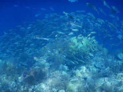 The visibility was so good we could see huge schools of big-eyed jacks below; the wall we snorkeled appeared to go straight down