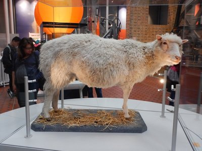 Dolly (now stuffed) was the world's first cloned mammal; born in Edinburgh