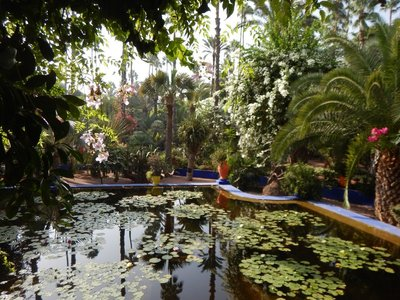 Majorelle Gardens provided an oasis of shade; open since 1947, they also house a Museum of Islamic Art