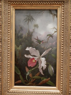 Two Hummingbirds above a White Orchid; Martin Johnson Heade, ca. 1875-90; Heade's intricately detailed paintings transported the viewer from the everyday to faraway lands