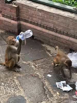 We visited the Swayambhunath Temple (aka Monkey Temple) which has been an important center of Buddhist learning for centuries; in Kathmandu we were told not to use water from the tap, trust only bottled water (even the monkeys don't trust the water!)