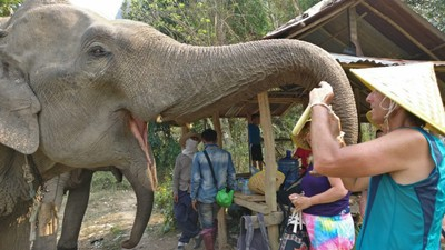 As part of our visit we fed the elephants bananas; we were told they eat hundreds of pounds of food every day which is one reason their former owners wanted to get rid of them