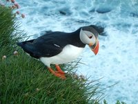 Amazing that puffins let people get so close to them!