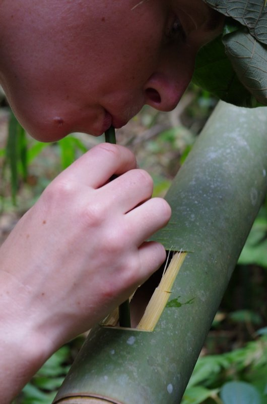 Bamboo, the plant that keeps on giving