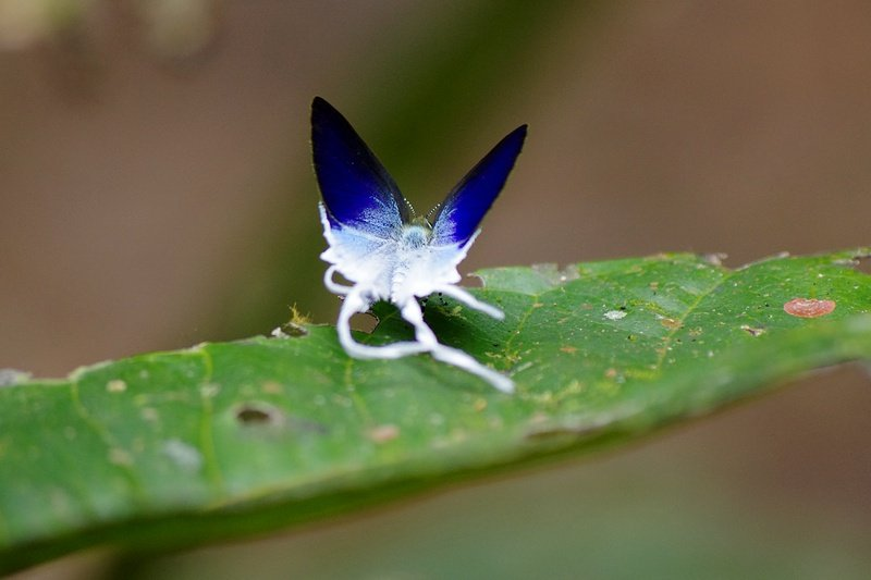 Butterfly, Khao Sok National Park