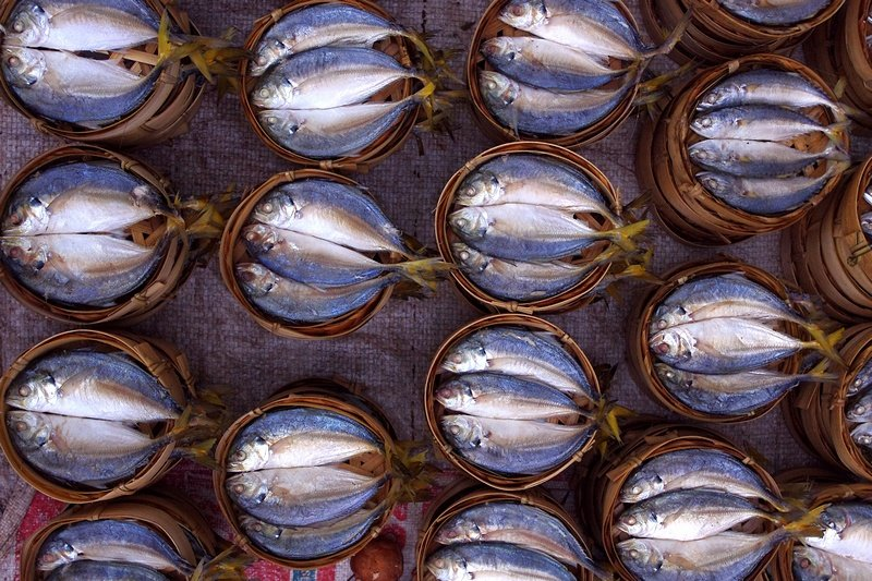 Mekong River fish in bamboo baskets