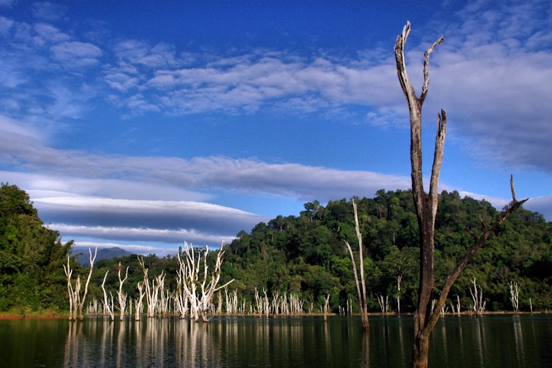 The remnants of the flooded forest