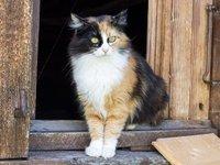 A friendly cat at Tre-la-Tete