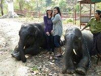 evening trek to the elephant camp!