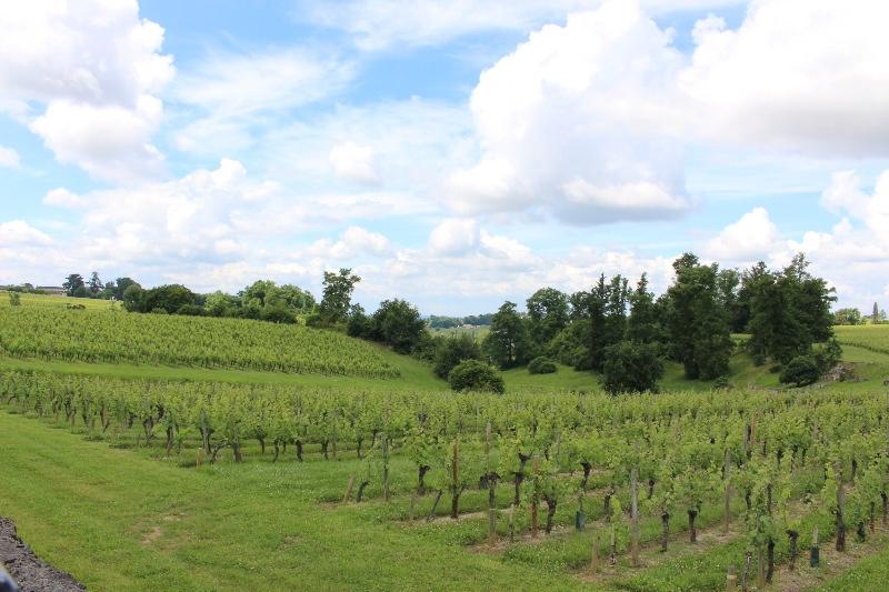 St Emilion - Vineyards - Chateau Petrus