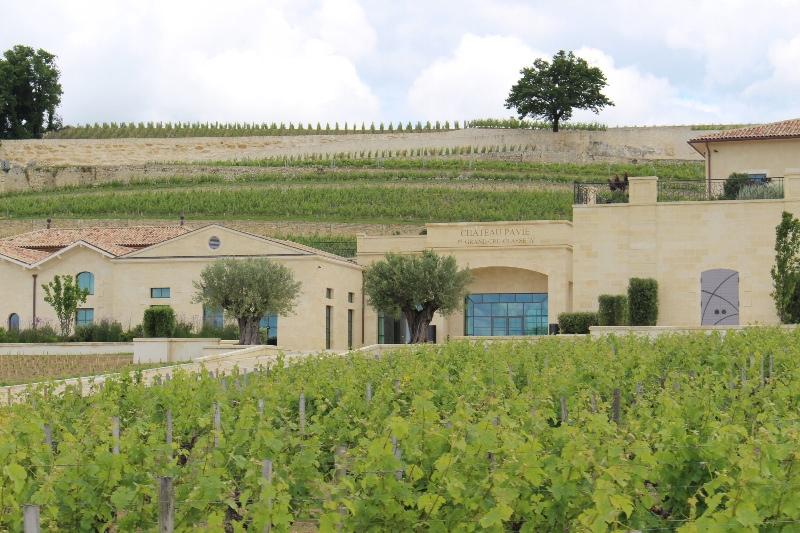 St Emilion - Vineyards