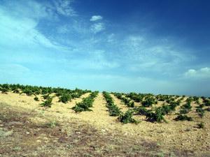 Fields of Noblejas