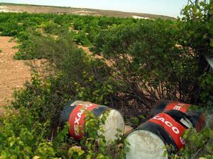 Noblejas Ecological Grape Fields