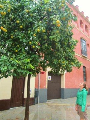SpainSevil..9__480x640_.jpg