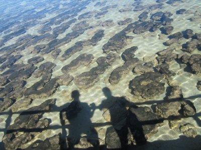 Stromaloti..40x480_.jpg