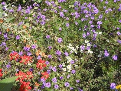 Desert colour at the Botanical Gardens