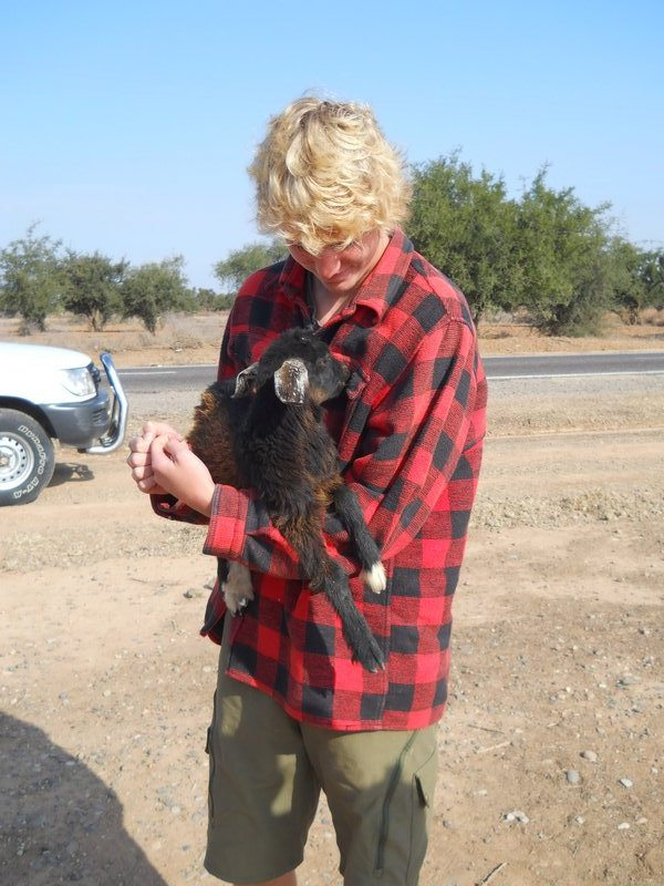 Max and a tree climbing goat
