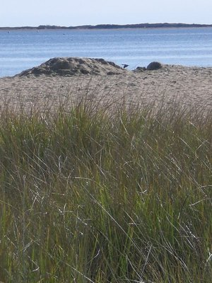 Dunes, sand and the sea - Cape Cod