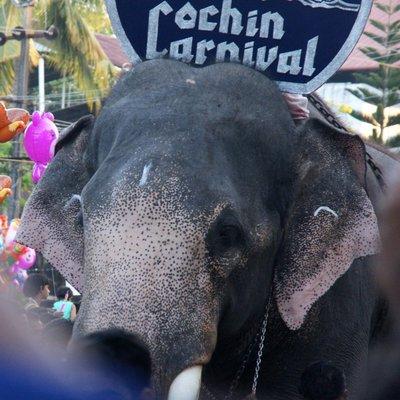 The Cochin Carnival Elephant
