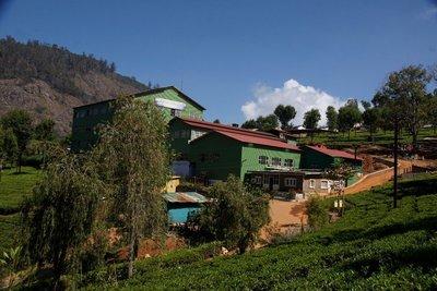 Highfield Tea Plantation