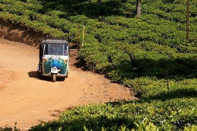 Pasha Driving Through Highfield Tea Plantation