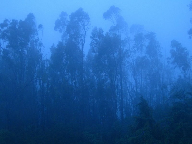 A foggy view - Ooty