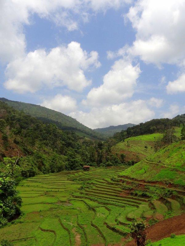 Culture en terrasse - Mae Hong Son