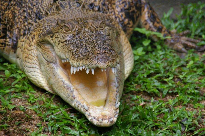 Dorris le crocodile. Gentille Dorris!
